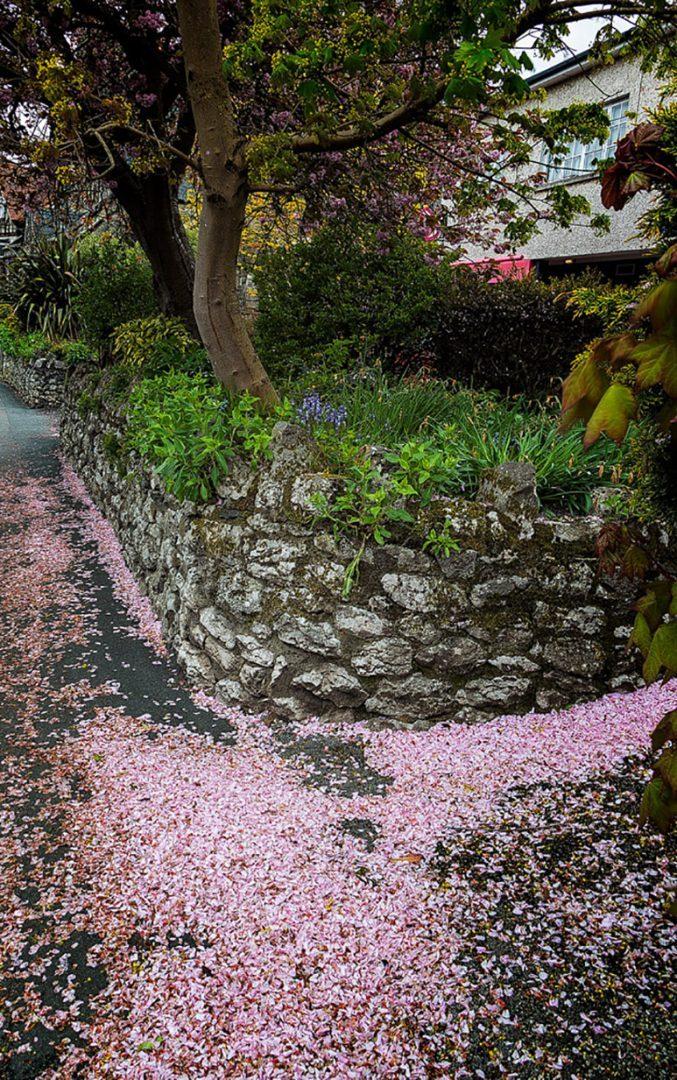grange fallen blossom May Holiday 2021